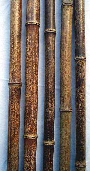 Bamboo Pole Suppliers ~ Bamboo pole stake