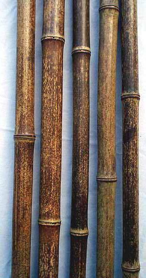 Bamboo Pole Amp Stake