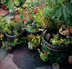 Container Water Gardening
