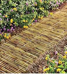 Bamboo Garden Pathway